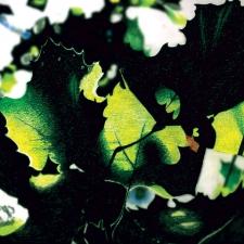 leaves-1200